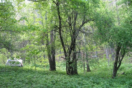 tent or rv camping in magical forest - West Jefferson - เต็นท์