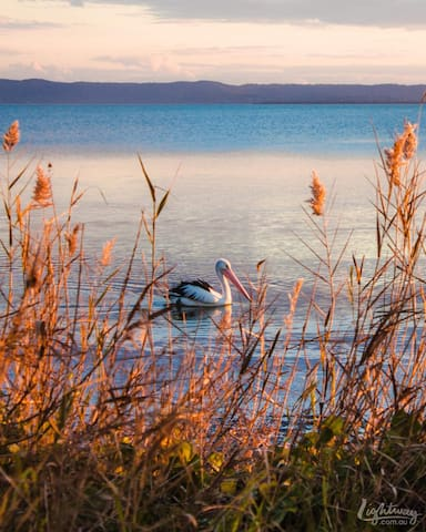 You can see plenty of pelicans swimming  about on the lake