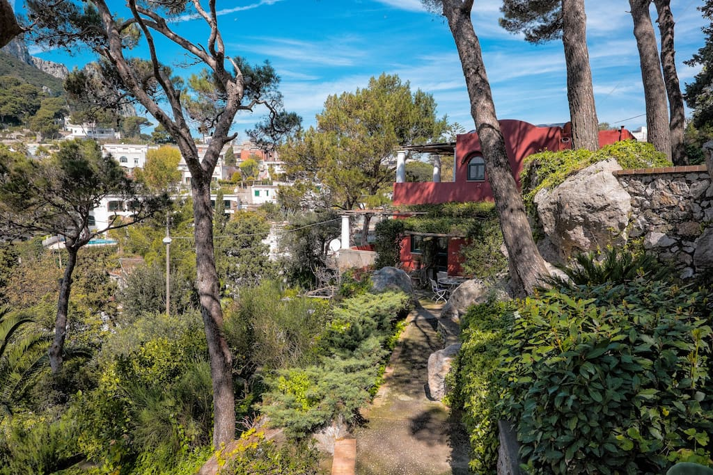 Mature garden of the Villa RED HOUSE with pine tree, palms etc..
