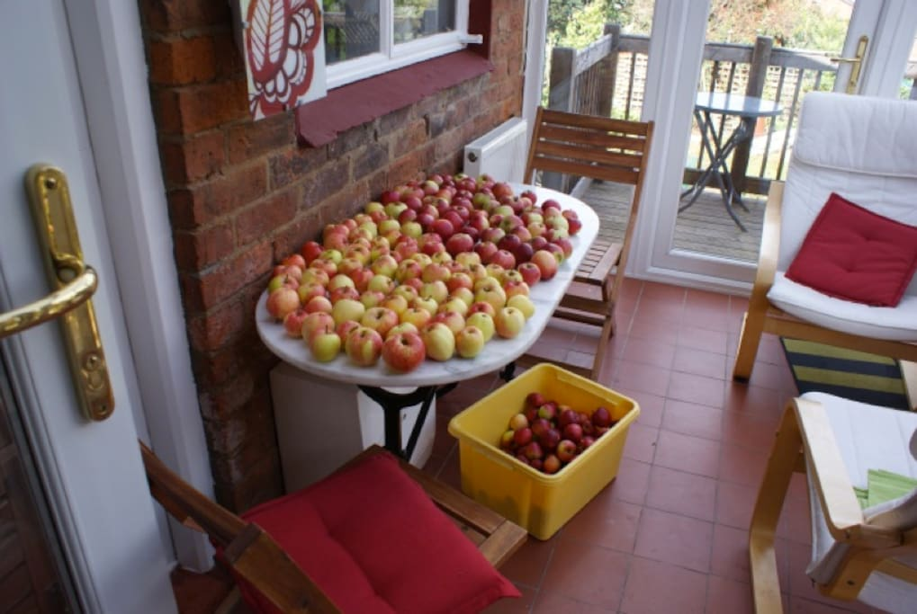 Collecting apples in the conservatory