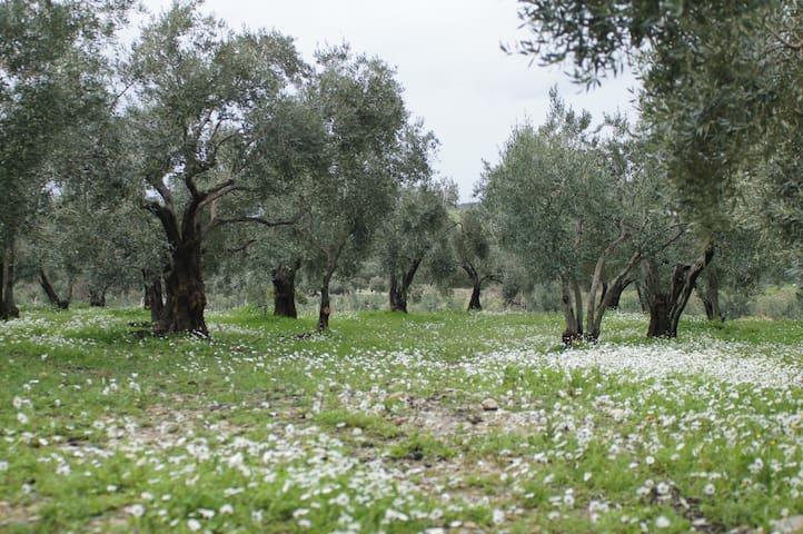 Agritoerisme op de olijfgaard - Davutlar - Apartment