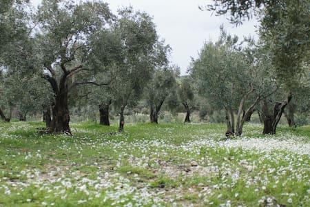 Agritoerisme op de olijfgaard - Davutlar