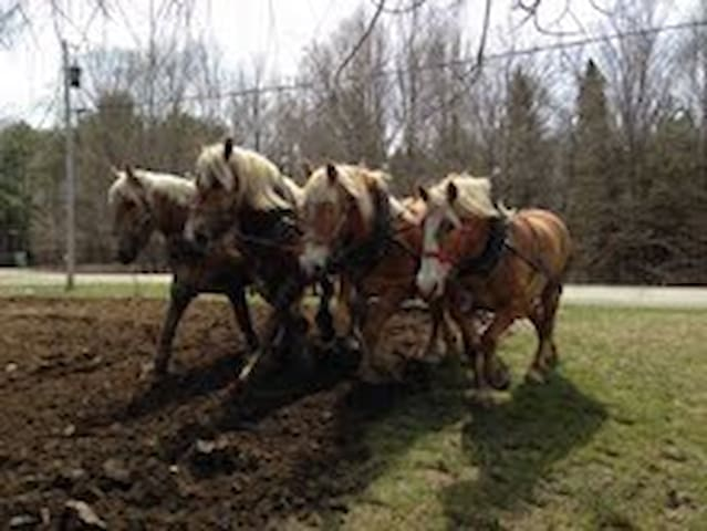 Horses Pulling Farmstay - Thorndike - House