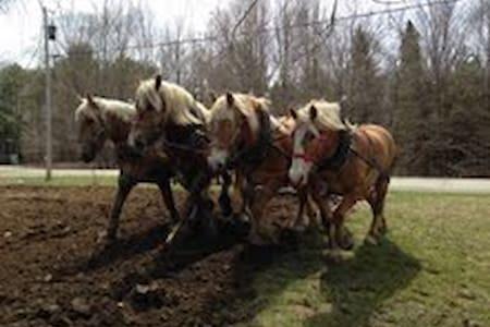 Horses Pulling Farmstay - Thorndike - 단독주택