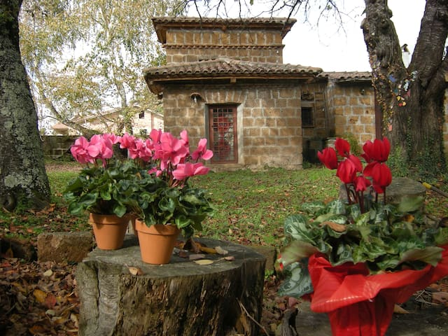 the old little house of ceramics  - Capranica - House
