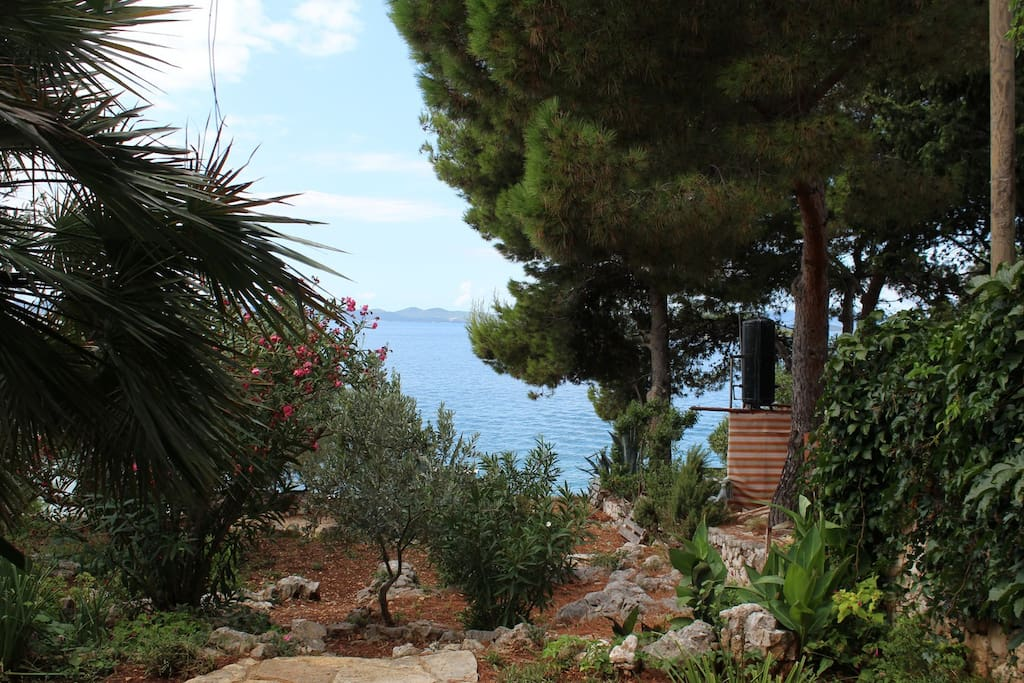 a view of the garden