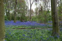 More Bluebells - Provender - does great Brunches on Wanstead High Street.