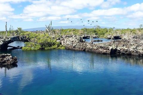 Privat værelse på Isabela Island!