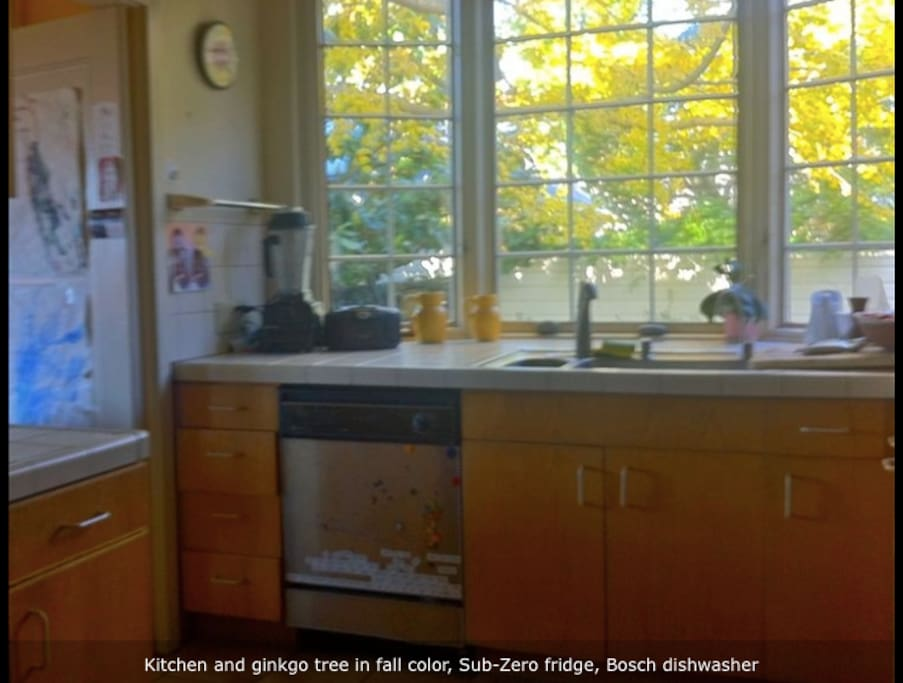 Kitchen with Bosch dishwasher and a Ginko tree view