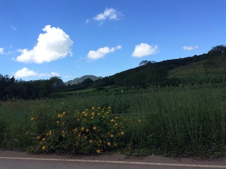 wongyada.farm