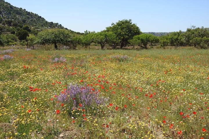 A field of flowers in May