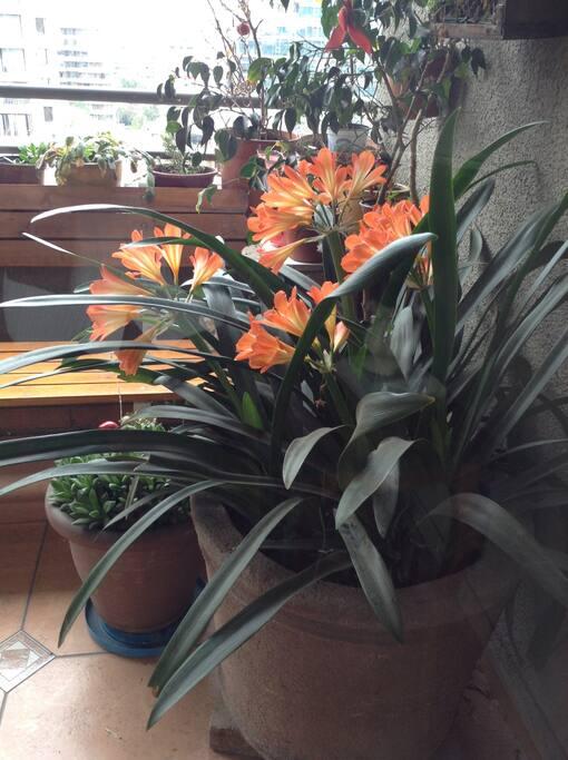 Agradable balcón florido para reposar o leer.
