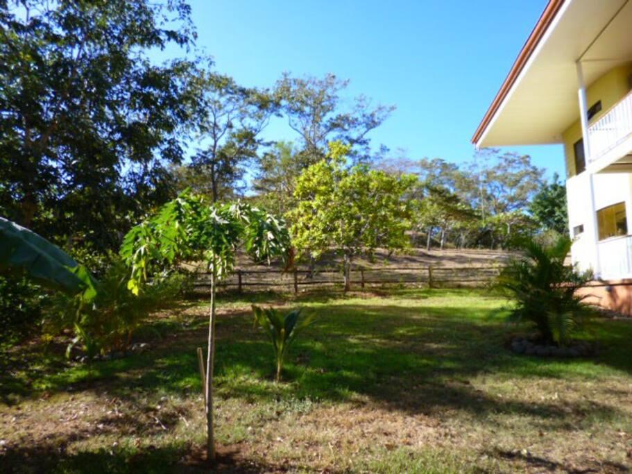 Casa amarilla case in affitto a tamarindo guanacaste for Case affitto costa rica