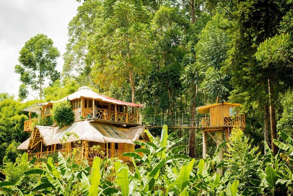 Habitacion doble en casa del rbol vilcabamba casas en for Alquiler casa arbol