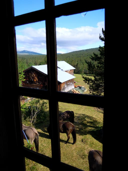 View from the room that is available: mountains, horses, farm yard, stillness...
