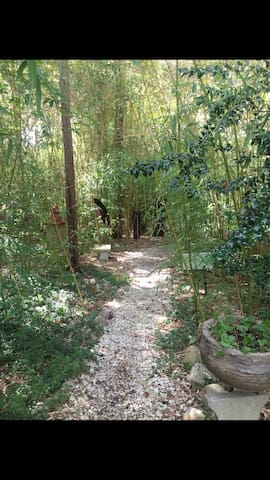 Walking path through bamboo