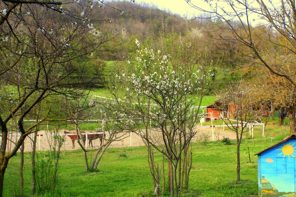 il giardino ha una casetta per giochi bimbi ,altalena e parcheggio all'interno parzialmente coperto