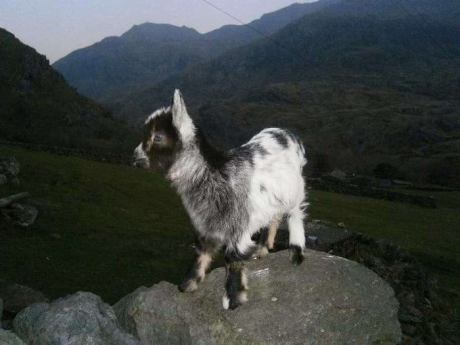 'Little Myn' She stands on a rock in the garden looking to the mountains and was well beloved.