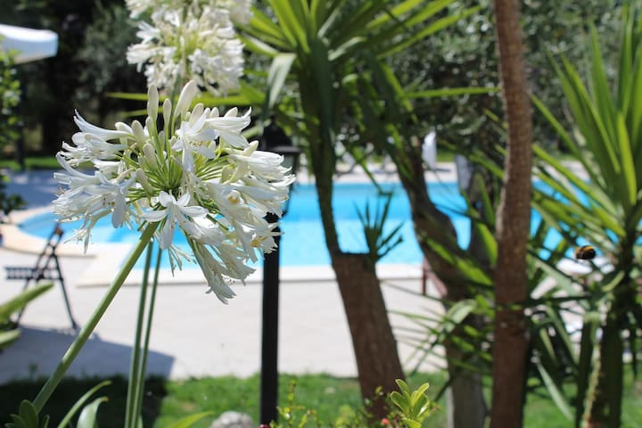 Mini appartamento con Piscina - Villa Orchidea