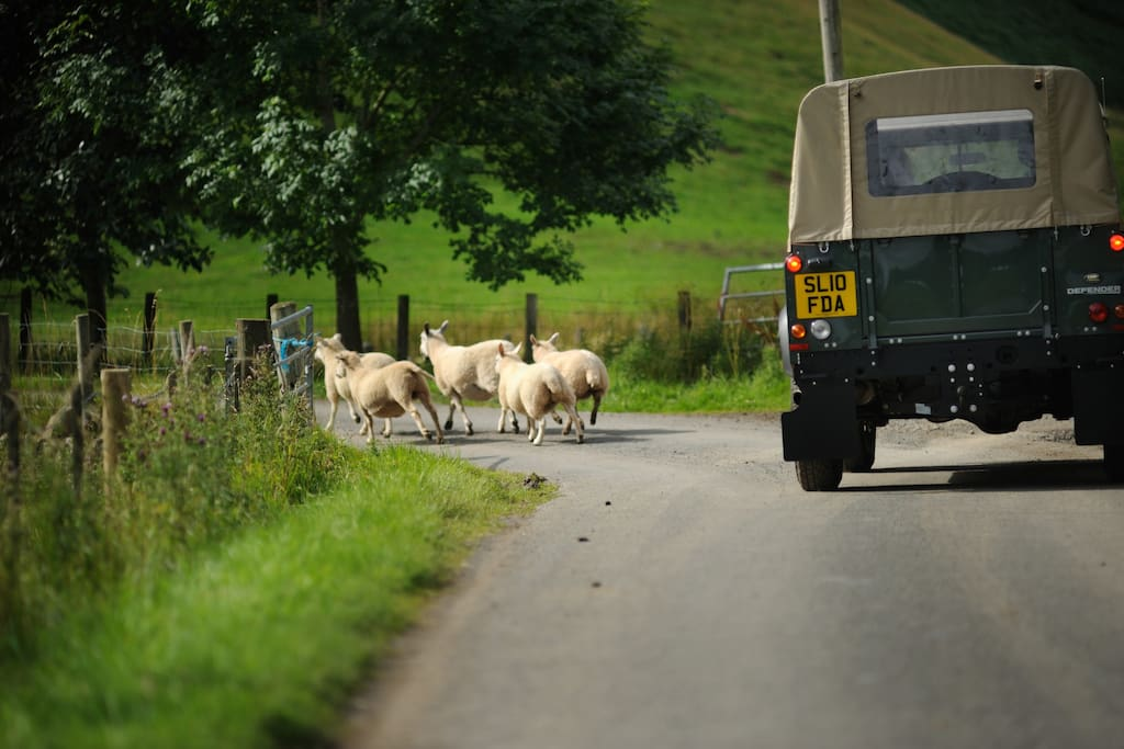 Life on a working hill farm in summer