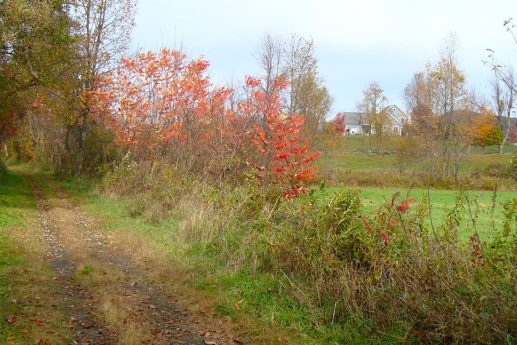 An autumn view of our house and farm from the D&H rail trail, which runs right behind us.