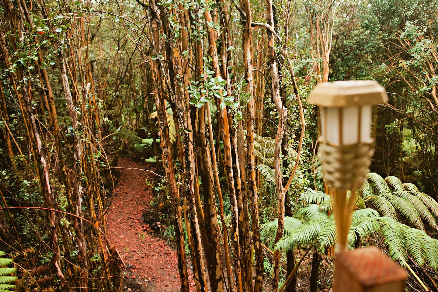 Just follow the red cinder path; adventure and luxury await you