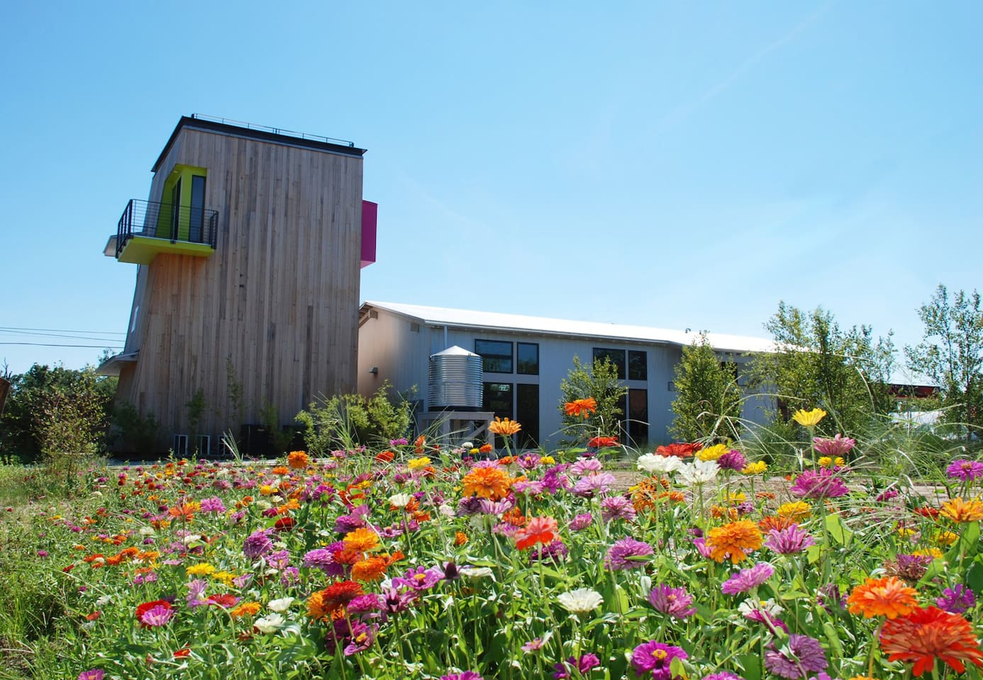 Wildflower meadow at Modern on Main, at the heart of sustainable Bay St Louis, MS.