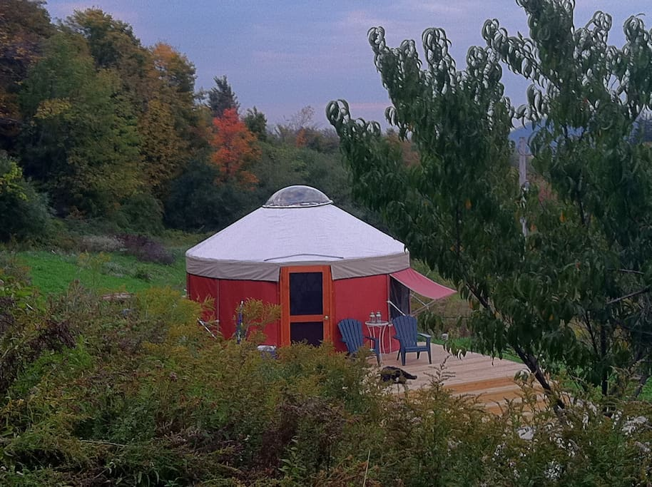 16 foot Yurt for Rent at Loomis Lair on 80 private acres (My dog Gracie, resting on the deck)