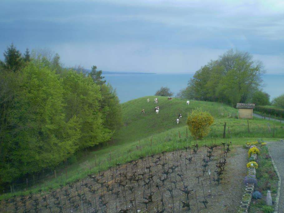 View from closed Veranda