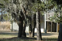 Spanish moss and live oaks on the grounds of Oyster Pointe overlooking the canal
