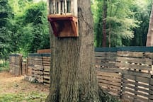 Our mini treehouse welcomes you to the big treehouse!