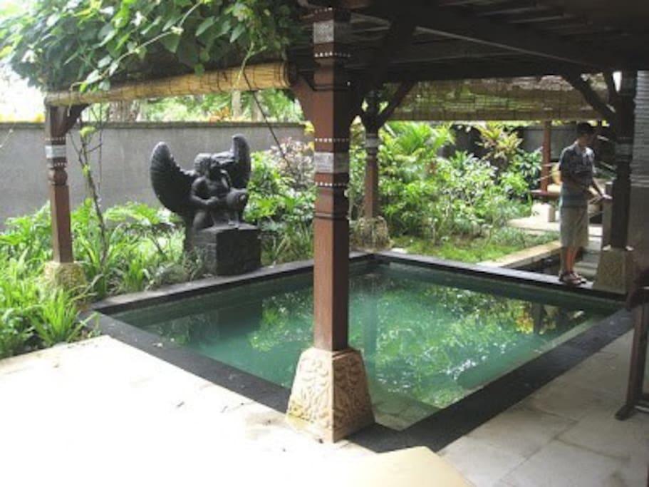 privet garden with dip pool