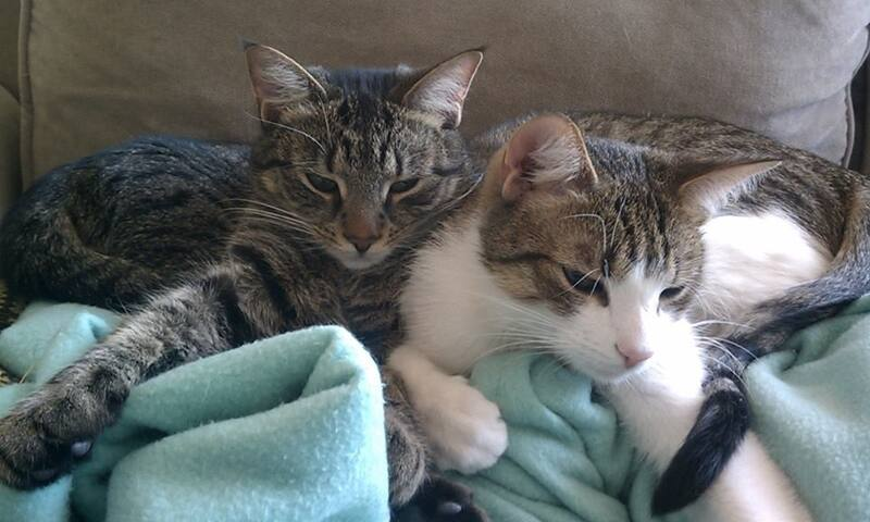 We have two cats! They are inquisitive and like to cuddle.