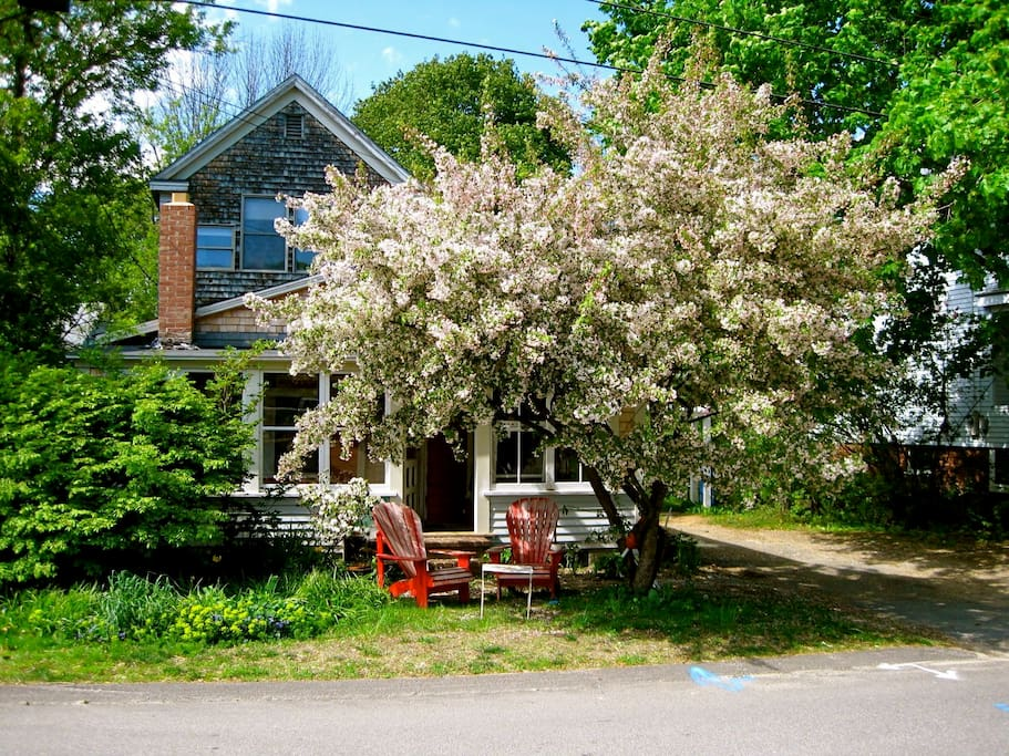 Front of house in Spring (pre lawn mower!)