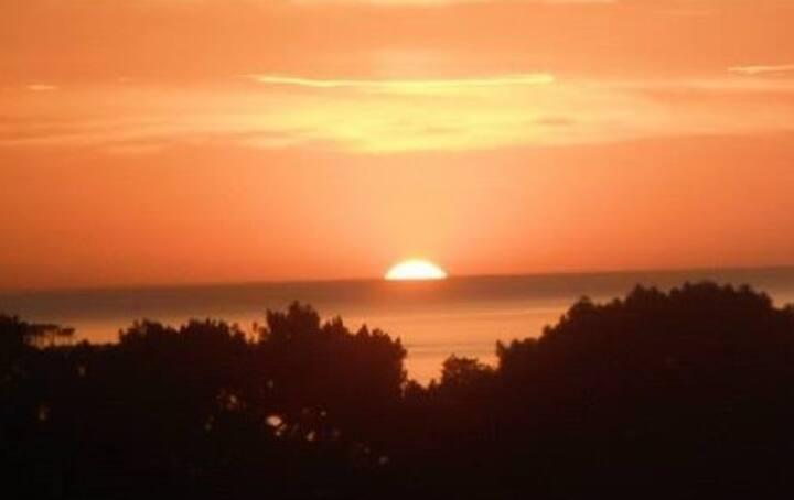 Punta del Este, 2 Ambientes, Vista Bosque y Mar!!!