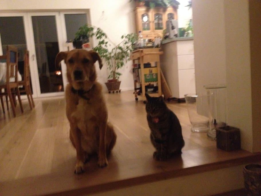 Zwei unserer Hausgenossen