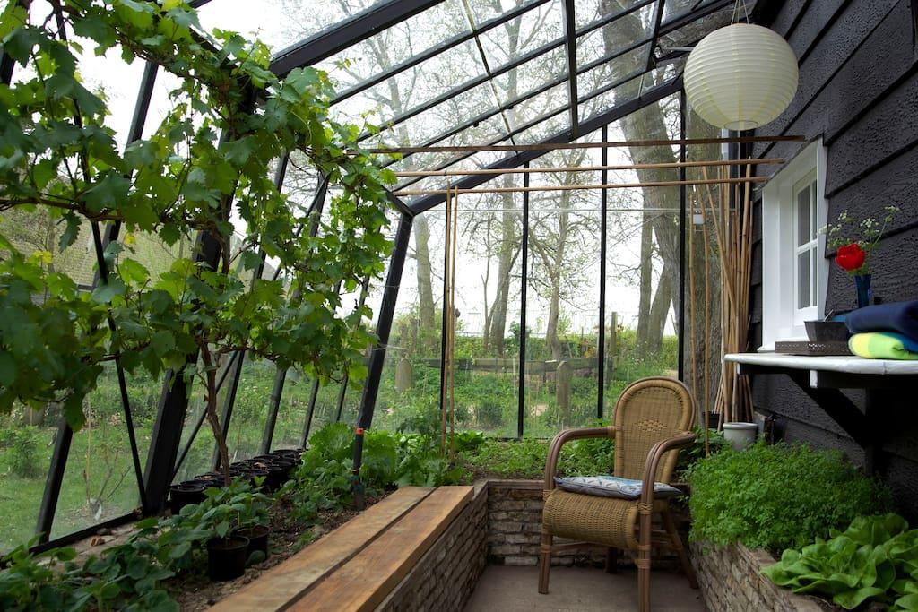 Kas met oogstbare groenten. Ook door het huis te bereiken. Prima plek om te zitten want lekker warm.