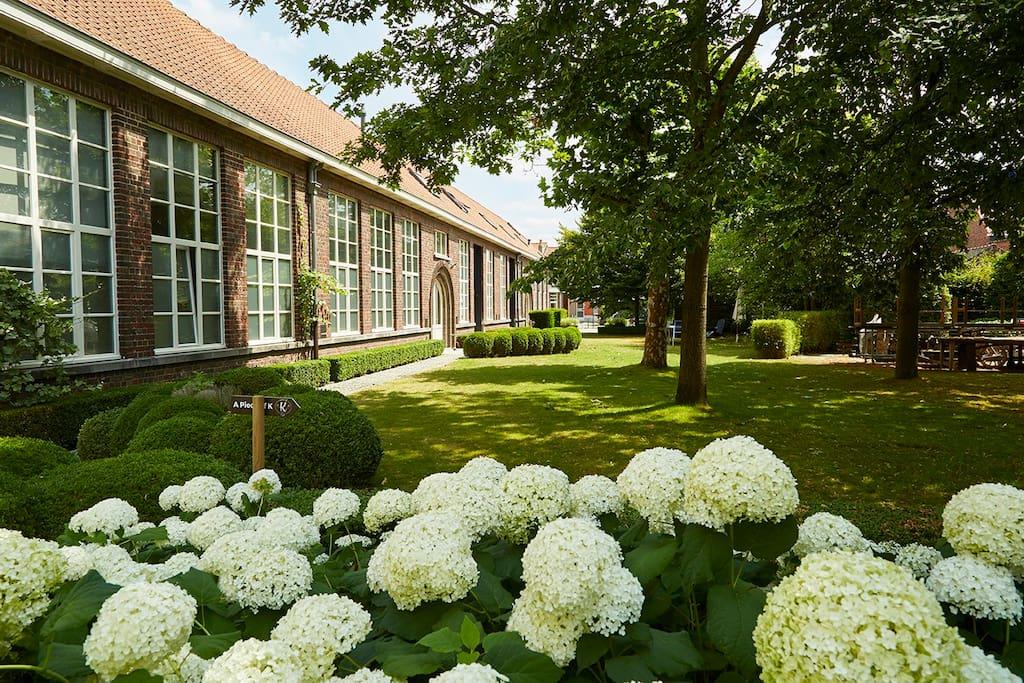 flowerful garden