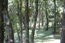 Árvores nos fundos da casa