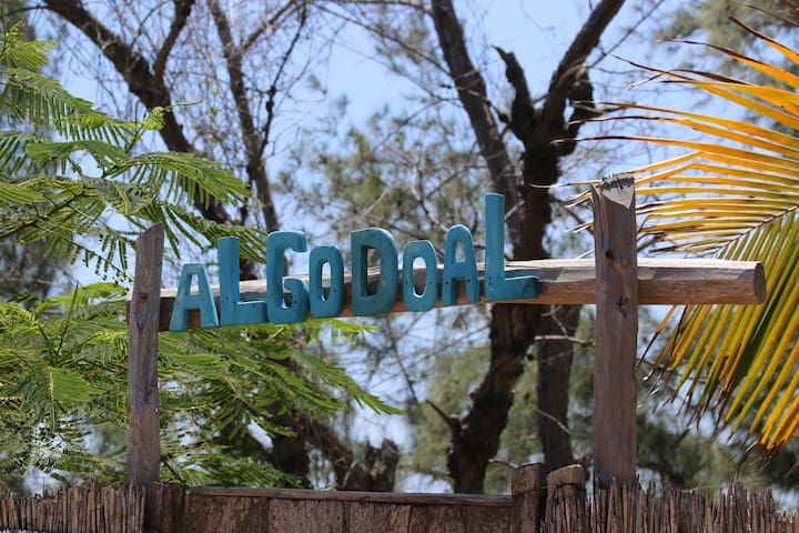 Welcome to Algodoal