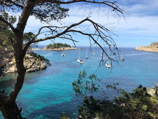 Cala de sa Ferradura & Illa des Bosc