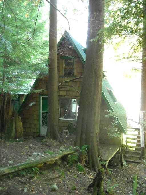 Back door to paradise!  This old growth forest will never be cut!