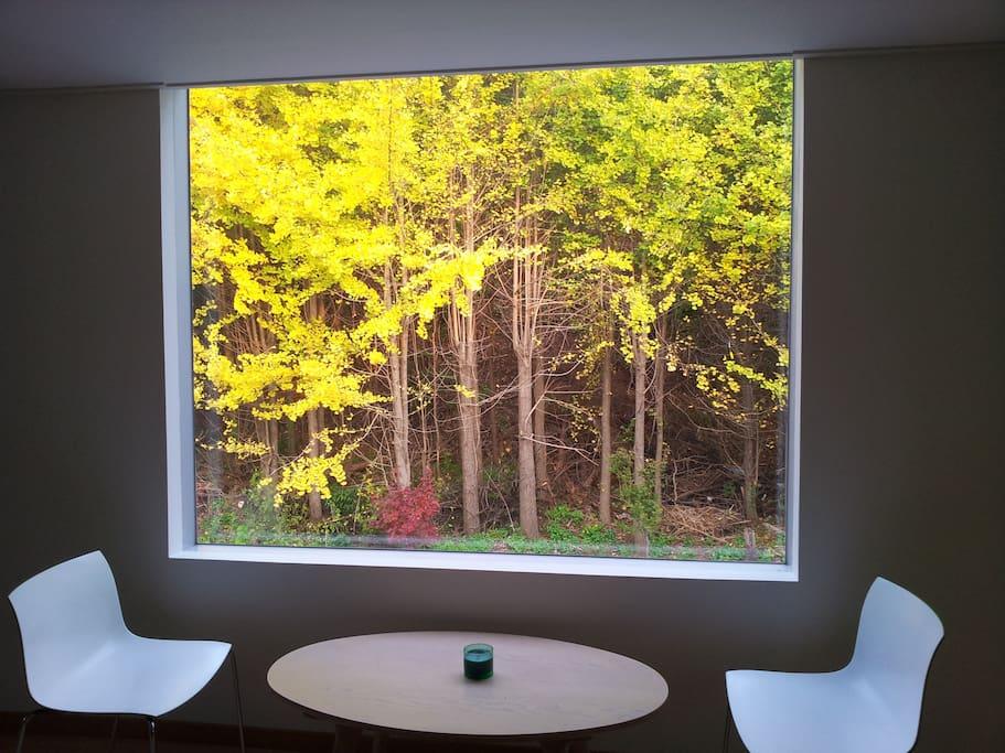 2층창으로 부터 보이는 창은 계절마다 색이 다르다.