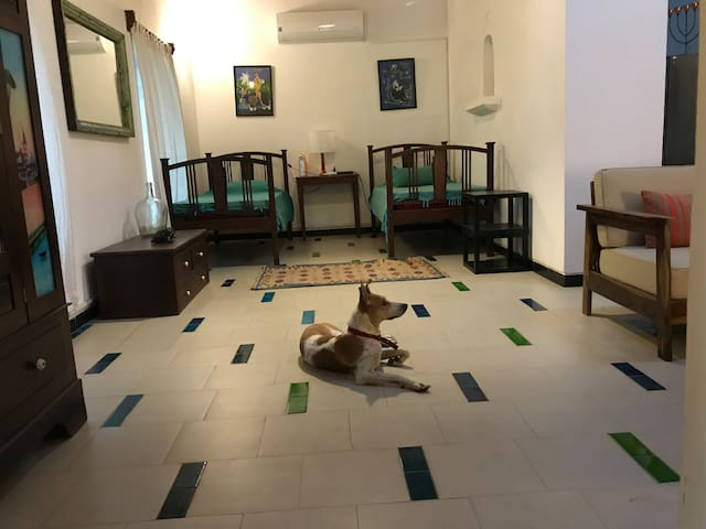The bedroom with Jugnu the visiting dog