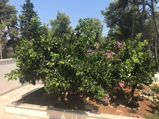 Mein Gartenstudio Supetar