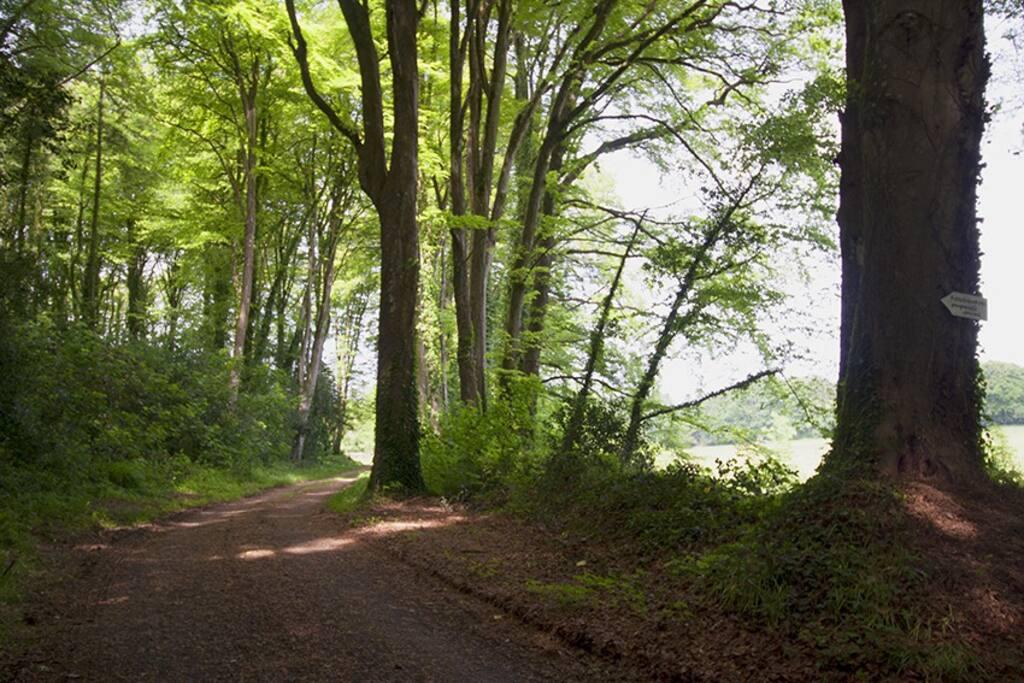 chemin d'entrée de la maison