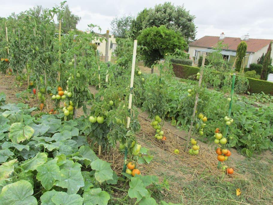 Notre jardin potager