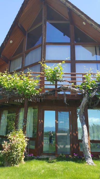 20 year grapevine growing on our deck