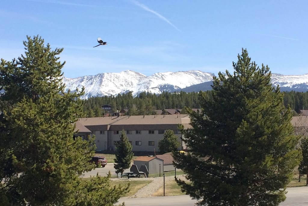 Incredible view of the Indian Peaks from the 2nd story condo deck. The free Winter Park/Fraser ski lift bus pickup is out front along the picnic area.