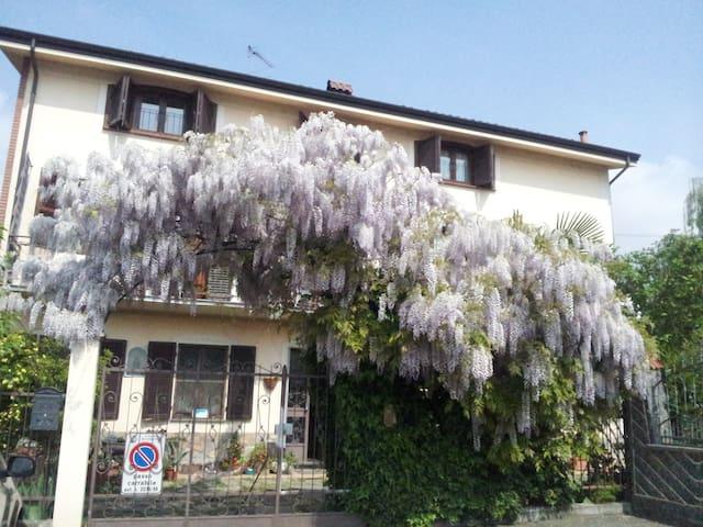 Wisteria 'Africa in Turin'